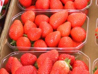 International Strawberry Symposium